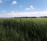 Bruges countryside.jpg