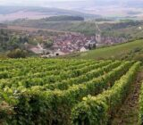 Frankreich_Burgund_Weingarten